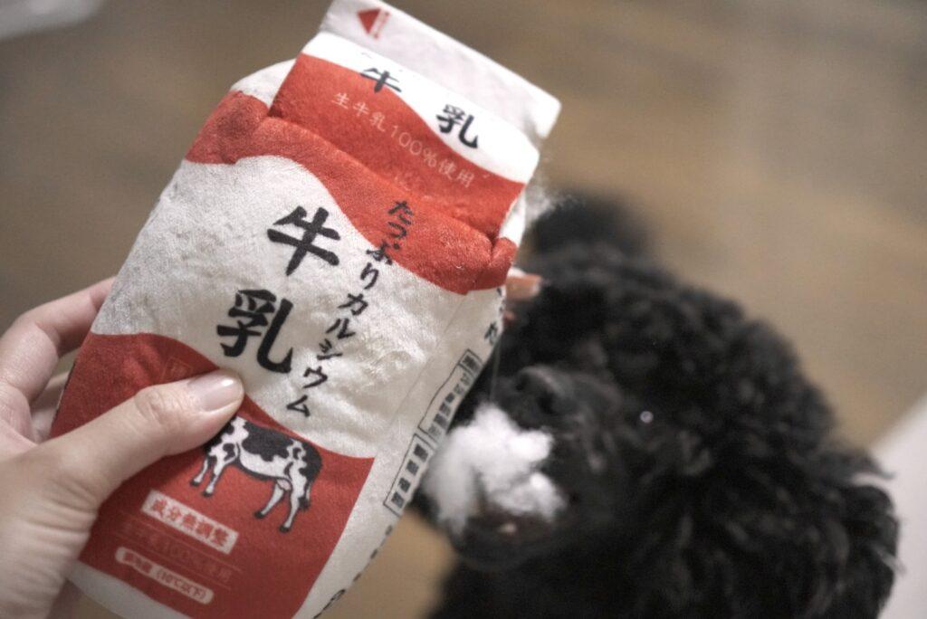 本物そっくりな牛乳の犬用おもちゃを破壊するトイプードルブラック